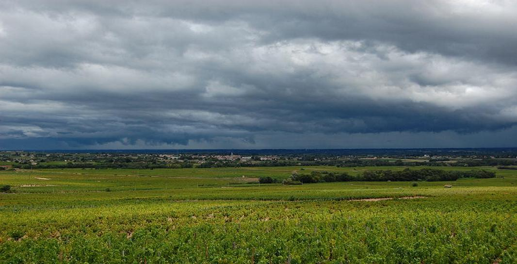 A storm coming in Beaujolais vineyards