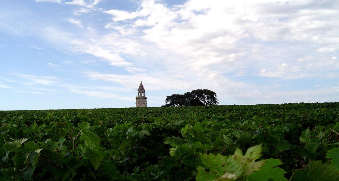 A vineyard in the Haut-Medoc