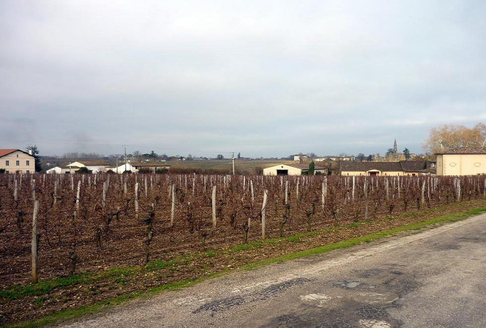 Vineyard in Pomerol
